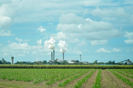 A young crop of sugar cane growing in a field with the refinery in the background emitting smoke during the crushing season, Australia