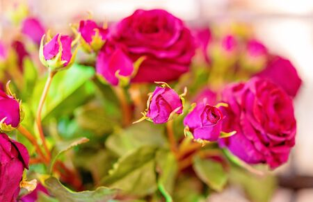 A bunch of red roses with green leaves softly focused for creative blur, background use, with copy space Stockfoto