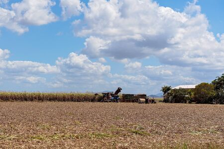 Harvesting sugar cane on an Australian farm and loading it chopped into bins for haulage to the refinery for crushing Reklamní fotografie
