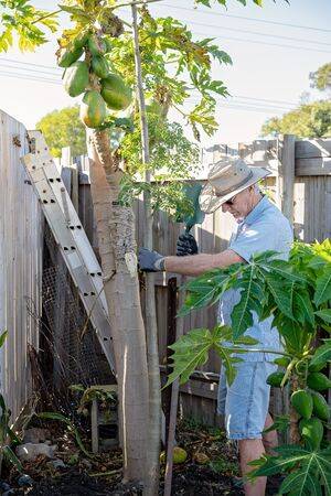 An active senior male retiree working in his garden planting trees on a sunny spring morning