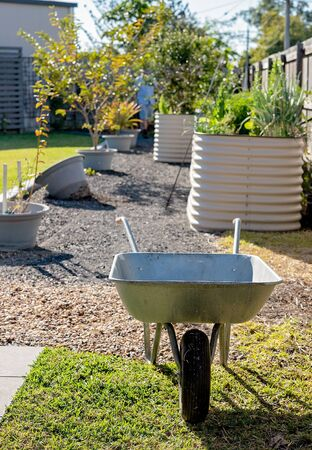 A wheelbarrow in front of raised garden beds in a backyard plot growing herbs and vegetables