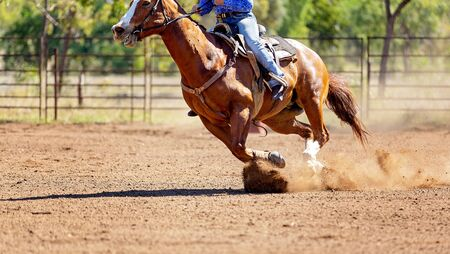 A cowboy on horseback chasing a calf in an Australian outback country rodeo
