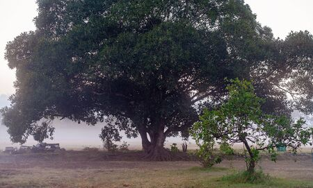 Early morning low-lying fog over a country landscape Banco de Imagens