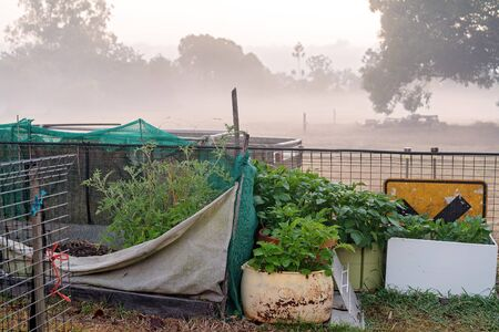 A country backyard vegetable garden with a variety of plants, in early morning fog