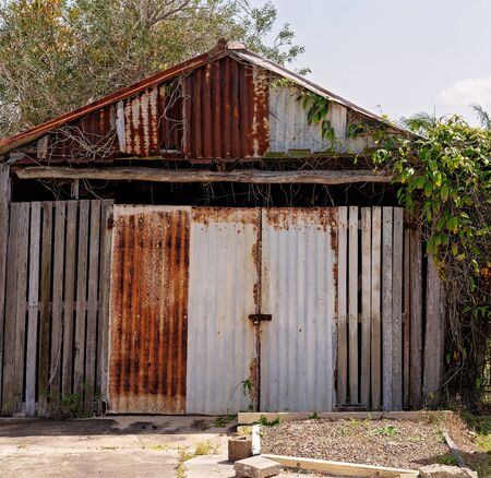 An old rusted iron and timber shed with vines growing through it Фото со стока