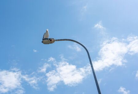 A pelican resting on a light pole against a clear blue sky