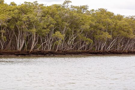 A mangrove vegetation eco system by the ocean