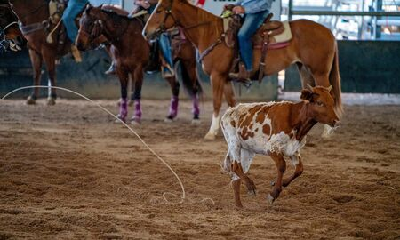 The rope missed the running calf, watched by cowboys on horseback