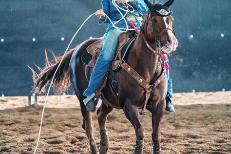 Female horseback rider ready to lasso a calf in team roping competition
