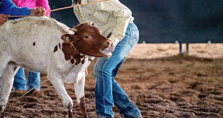 Cowboys attempt to move a stubborn calf back to its corral