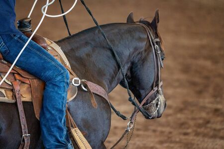 Close up of a cowboy in the saddle at a roping competition in an outback arena