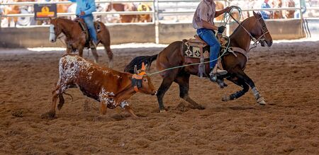 A calf being lassoed by a cowboy on horseback at an outback country rodeo Banco de Imagens