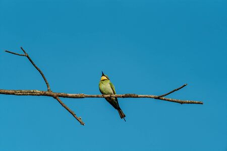 A bee-eater bird perched on a branch against a clear blue sky background