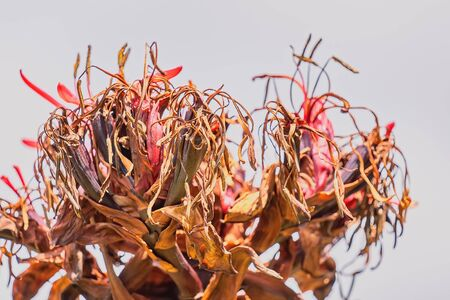 Close up of a dying and decaying plant isolated against the sky Zdjęcie Seryjne