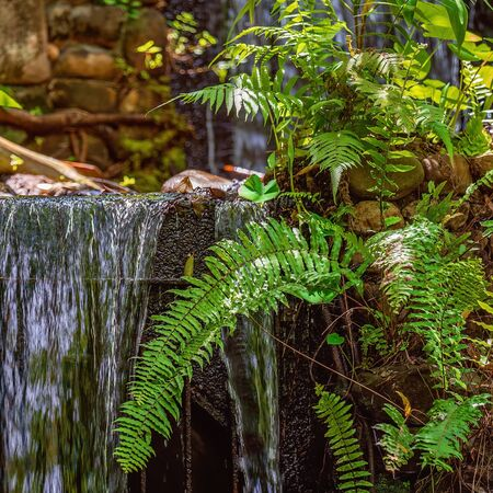 Lush green ferns in front of an artificial waterfall in botanic gardens, nature combining with man-made to create a sense of serenity Zdjęcie Seryjne
