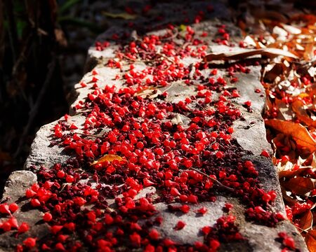 Fallen red flowers on a stone wall with shallow depth of field and intentionally blurred foreground and background