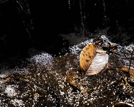 A brown leaf fallen into the bubbles of a waterfall giving off a bright speckled light