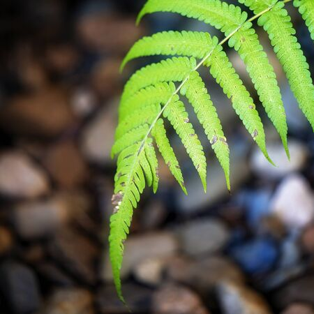 Close up of a green fern frond against a stoney background
