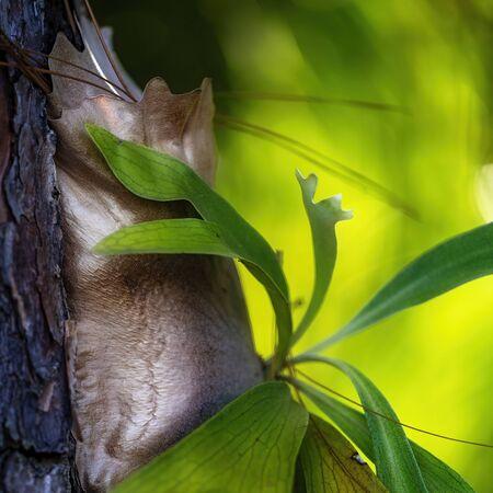 Close up of a green birds-nest fern on a tree trunk Zdjęcie Seryjne