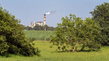 Sugar mill refinery as seen framed by trees, with a crop of farmed cane in the foreground. Mill stack is emitting smoke as it is the crushing season. Zdjęcie Seryjne
