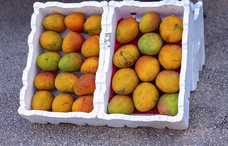 Two cases of juicy mangoes for sale at a market stall Zdjęcie Seryjne