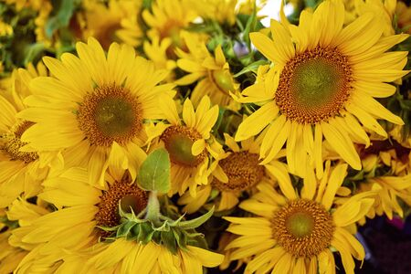 A bunch of large sunflowers for sale at a market stall Zdjęcie Seryjne