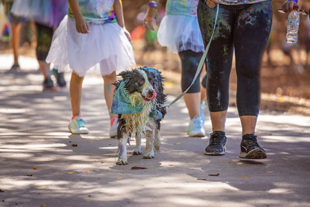 A black and white dog covered in coloured powder in a fun run in an outdoor public park Publikacyjne