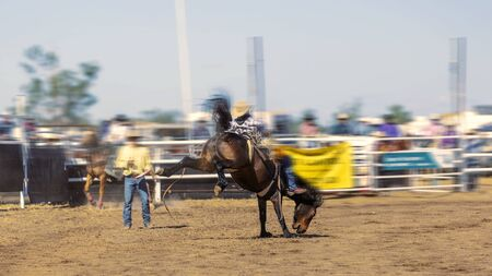 A cowboy rides a bucking horse in the bareback bronc competition at a country rodeo