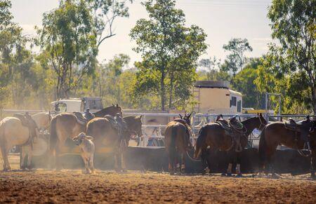 Rodéo - Chevaux attachés dans la poussière dans un enclos, prêts pour leur événement dans un rodéo de campagne