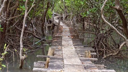 An old wooden bridge winding through the mangrove forest over a creek at high tide