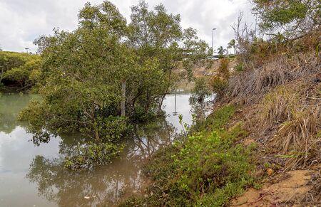 Mangrove swamp ecosystem in a creek running off the ocean on the Capricorn Coast of Australia Reklamní fotografie