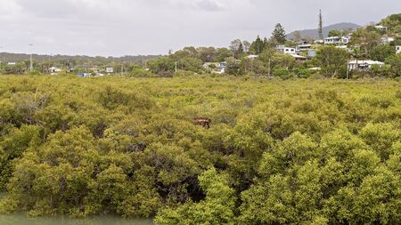 Mangrove swamp ecosystem in a creek running off the ocean on the Capricorn Coast of Australia Imagens