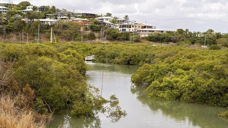 Mangrove swamp ecosystem in a creek running off the ocean on the Capricorn Coast of Australia Stock Photo