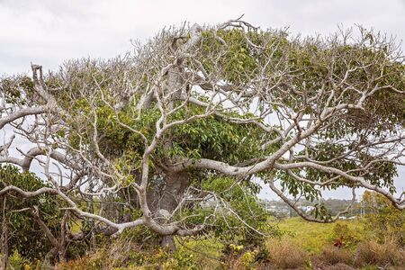 The spreading branches of a healthy tree growing on the edges of a mangrove ecosystem Reklamní fotografie