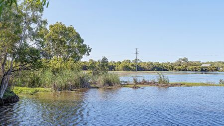 A wetland ecosystem typically flooded by water with abundant bird and fish life Imagens