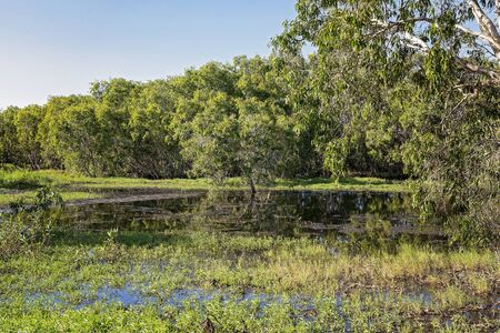 A wetland ecosystem typically flooded by water with abundant bird and fish life Stock Photo