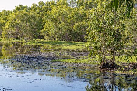 Un ecosistema de humedal típicamente inundado por agua con abundante vida de aves y peces.
