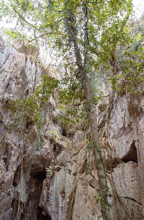 Trees growing outside a cave ecosystem, the outside of which can be seen in the background Stock Photo