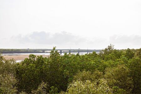 Green vegetation in the foreground with a bridge in the background as seen across a river at low tide