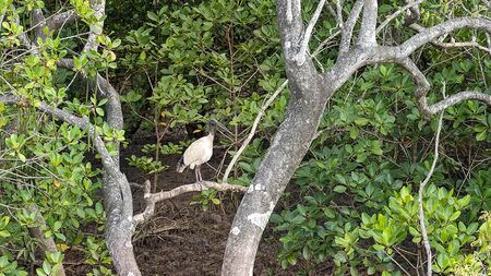 An egret bird perched on a tree branch in a muddy swamp