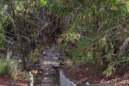A shady forest of swamp trees Reklamní fotografie