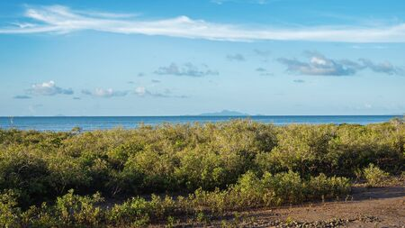 Dense mangrove on the waters edge by the beach, with the ocean in the background under a cloudy blue sky Archivio Fotografico