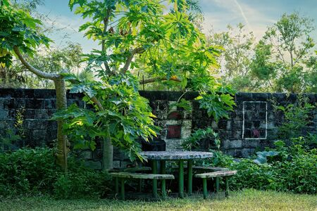 Table and stools in an overgrown outdoor garden beside an old moss covered brick wall, shaded by pawpaw trees