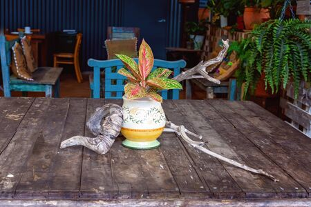 Driftwood on an old wooden table surrounding a colourful pot plant in a casual cafe restaurant