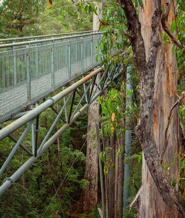 A steel suspension walkway amongst the treetops in Tasmania. Cinematic colour toning.