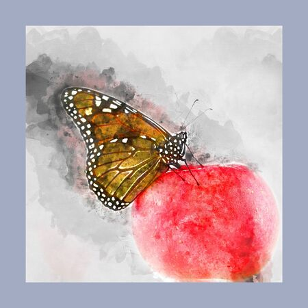 Digital watercolor painting of a monarch butterfly sitting on top of a red apple