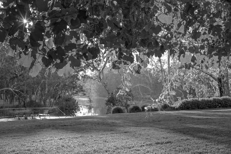Monotone rendition of hanging grape vines filtering light and framing a beautiful river scene beyond Stock Photo