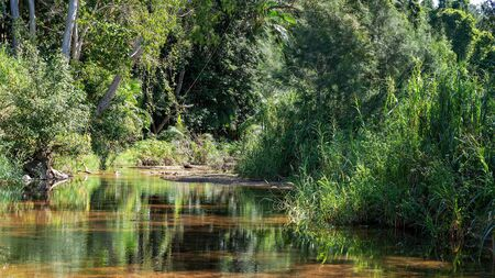 A still and tranquil country creek with thick vegetation on its banks reflected in the water