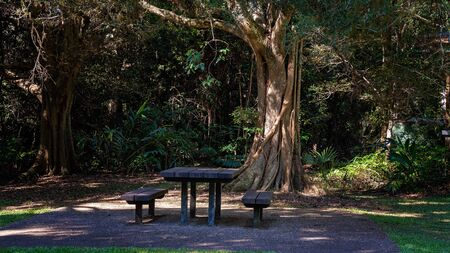 Picnic table and chairs under a shady tree for public use in a tropical rainforest