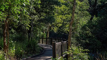 Walking track in a tropical rainforest in an Australian national park